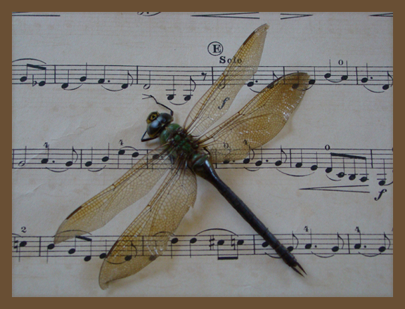 Dragonfly1.pg