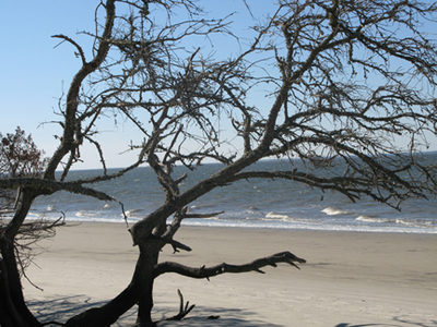 Beach11108_3