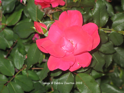 May_flowers_3