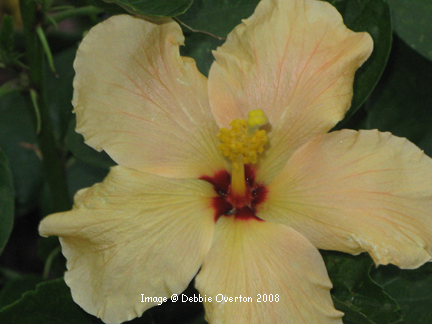 May_flowers_4