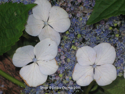 May_flowers_5