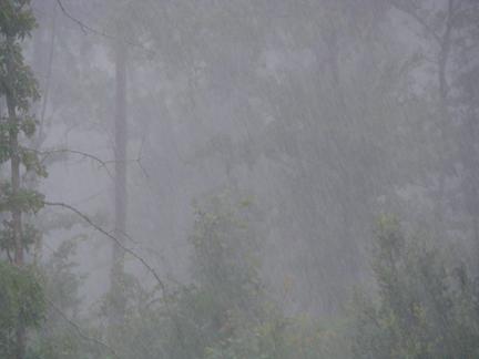 Rain_ts_fay